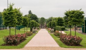 New avenue at Priory Park, Dudley with pleached hornbeams and rose beds, 2014